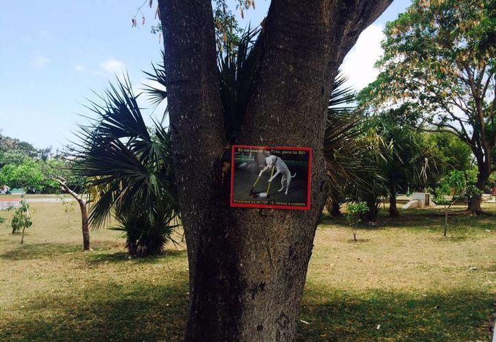 Los letreros se colocan en los árboles, para que los paseantes los noten y tomen conciencia.  (Amaury Rodríguez/SIPSE)