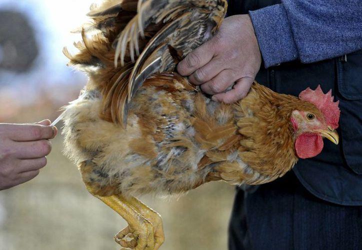 Las autoridades ordenaron el cese del comercio de aves vivas. (Agencias)