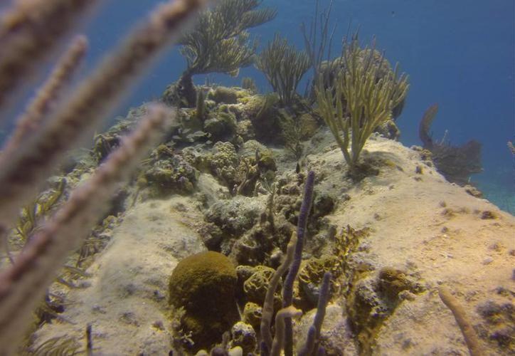 La barrera arrecifal que protegía a Quintana Roo de los embates de un huracán, está debilitada. (Archivo/SIPSE)