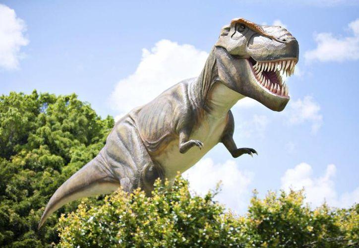 Jeff, réplica de un Tiranosaurio Rex, se exhibirá en el centro vacacional de Coolum en Australia. (EFE)