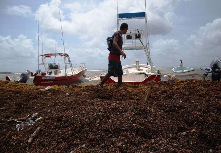 Las rachas de viento de hasta 50 kilómetros por hora han mantenido el puerto cerrado y han causado el recale de más sargazo. (Octavio Martínez/SIPSE)