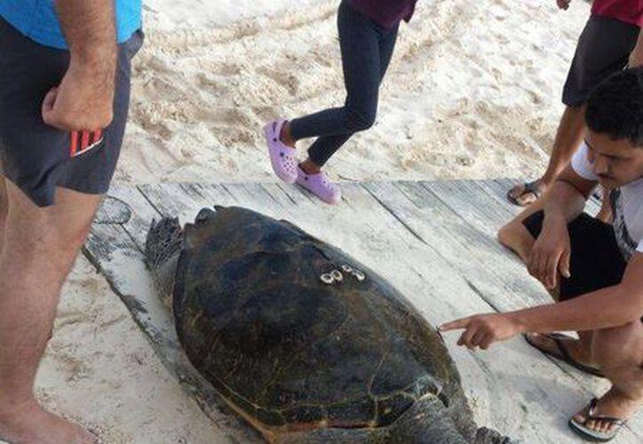 Vecinos de Punta Sam dieron parte del hallazgo a las autoridades correspondientes. (Redacción/SIPSE)