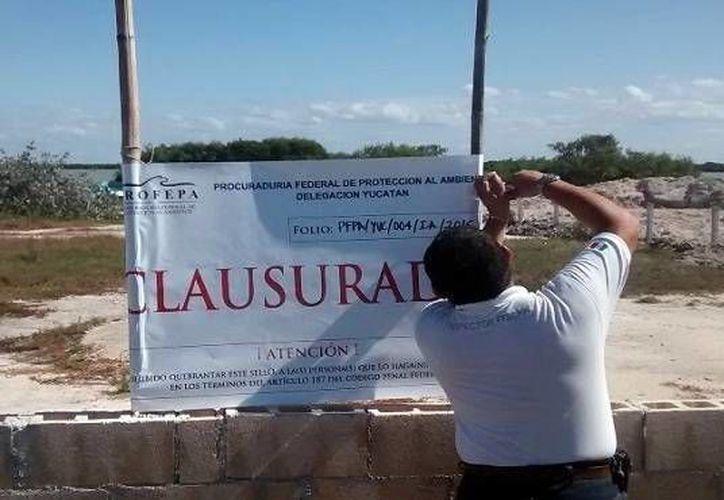 Un trabajador de la Profepa clausura un predio por daños a ecosistemas protegidos. A través de los operativos que realiza la dependencia federal se evitan algunas acciones ilícitas. (Milenio Novedades)