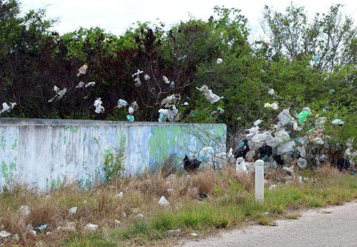 Los jóvenes yucatecos pidieron mayor información sobre sanciones a quien dañe el ambiente. (José Acosta)