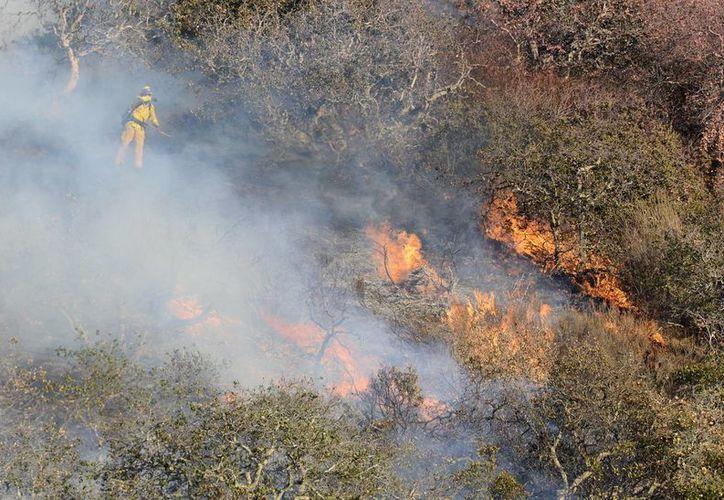 Un par de enormes incendios forestales han sido una pesadilla para residentes del norte de California. (AP)