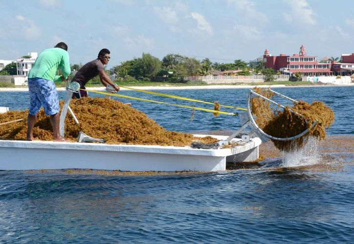 El prototipo será usado para la recoja de sargazo, antes de que el alga llegue a la orilla. (Victoria González/SIPSE)