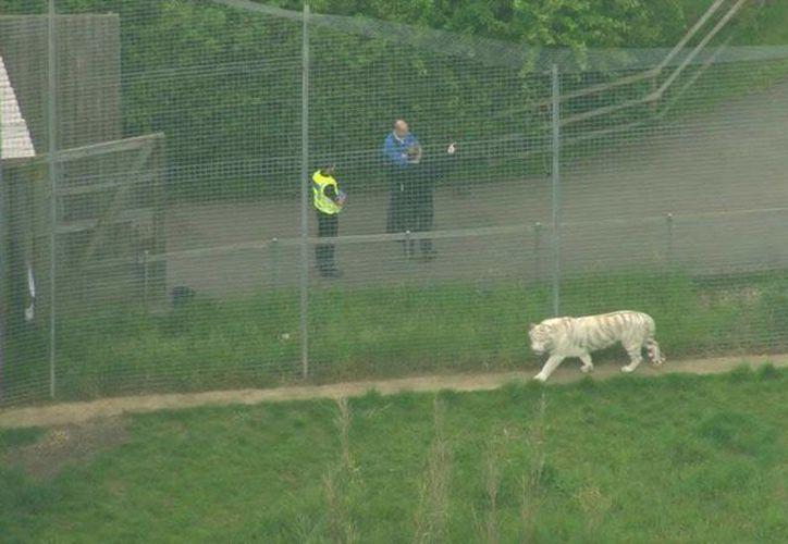 En ningún momento el animal se escapó del recinto. (Excelsior)