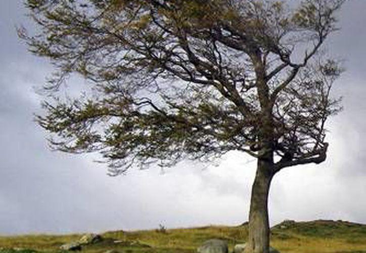Por la caída de los árboles debido a los fuertes vientos no se reportaron daños materiales. (Foto de Contexto/Internet)