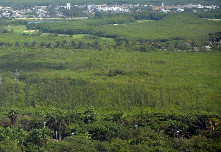 El proyecto ayudaría a evitar el cambio de usos de suelos. (Jesús Tijerina/SIPSE)