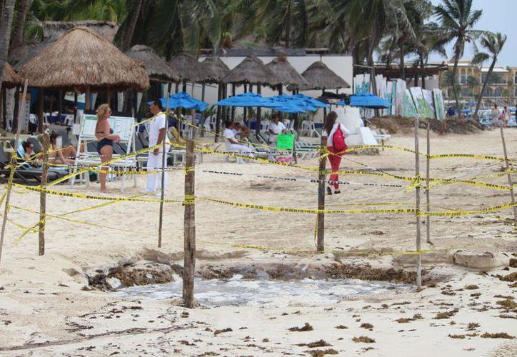 De manera natural tras la llegada del sargazo se ha restaurado la zona de playa en Solidaridad. (Foto: Daniel Pacheco/SIPSE)