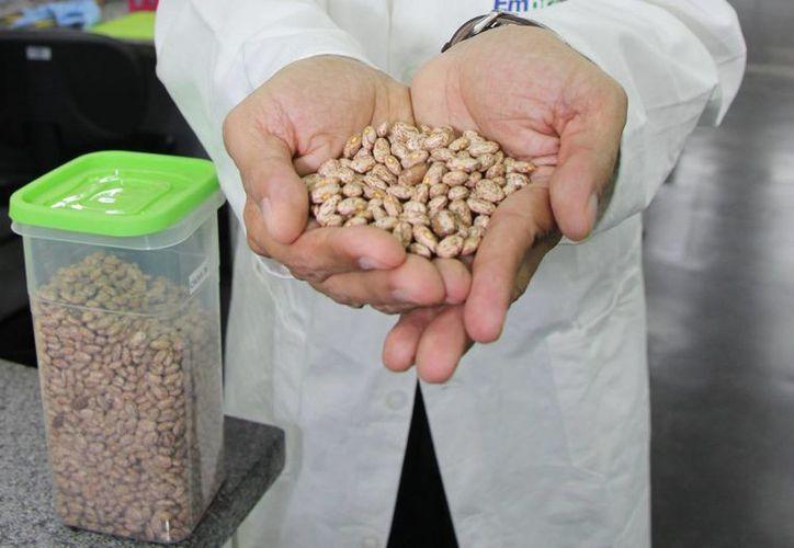 Desde 2013 los productos genéticamente modificados ya reportan beneficios económicos a escala global por 20.5 mil millones de dólares anuales. (Archivo/Notimex)