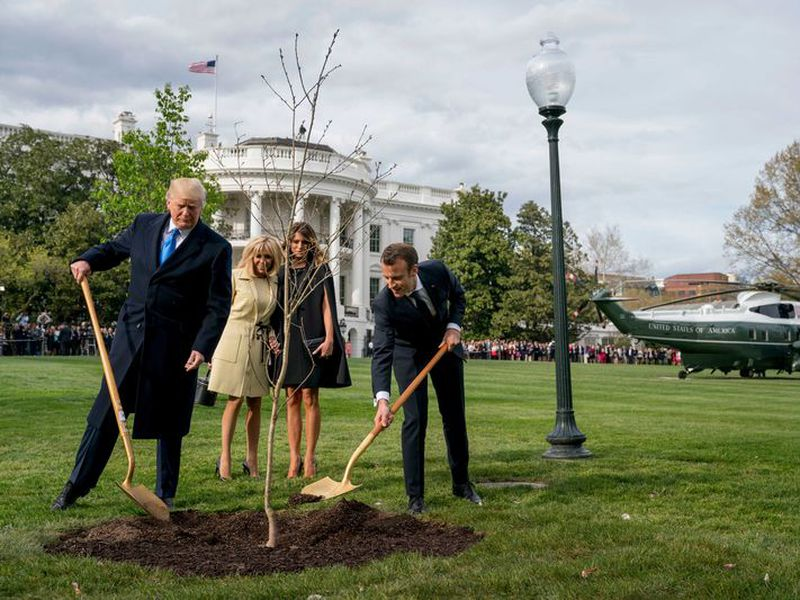 On the right, empty area where a tree was planted by U.S. President Donald Trump and French President Emmanuel Macron during ceremony on the South Lawn of the White House. (AP)