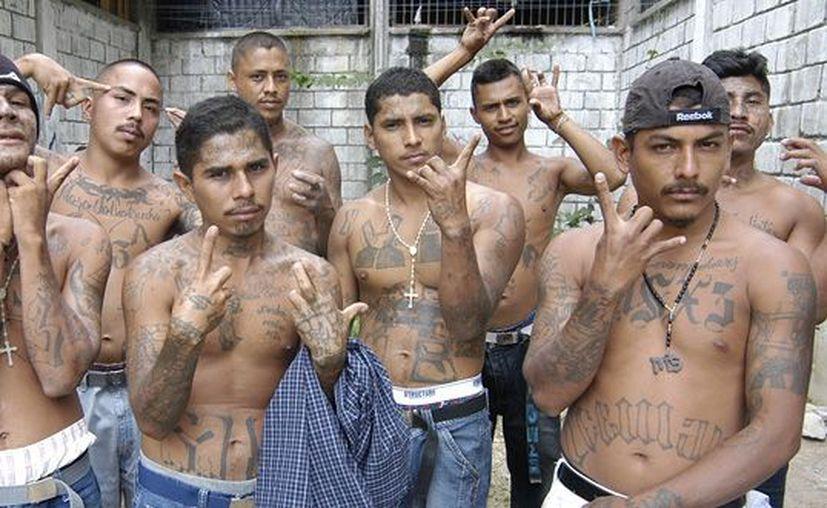 También quieren que en las zonas donde viven los pandilleros se implementen campañas de salud mental. (blogspot.mx)