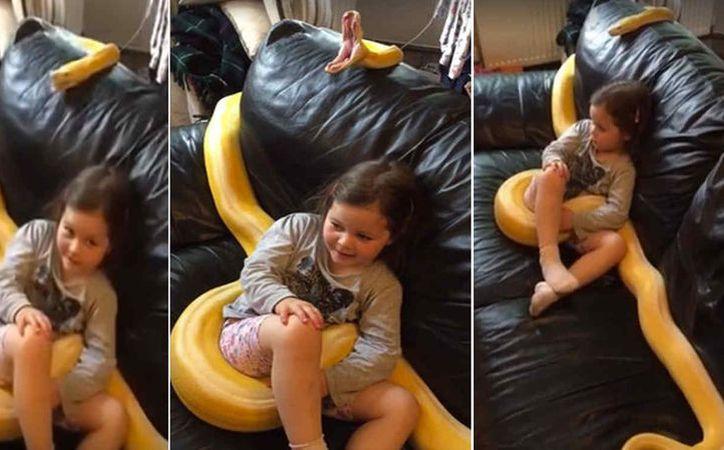 El padre de la niña dijo que la serpiente, de nombre Cher, es un animal domesticado, que como cualquier otro animal bosteza. (Foto: Telemundo)