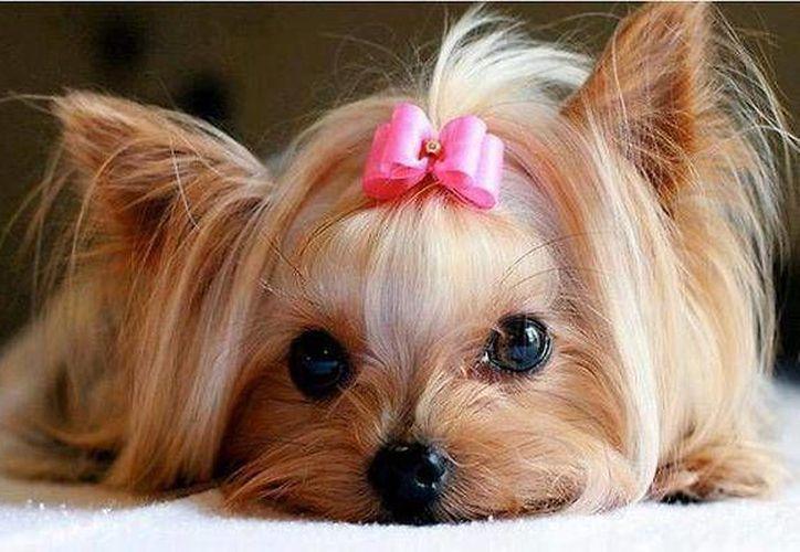 Además de la cirugía, se brindará atención de cinco días de recuperación a la mascota. (Contexto/Internet)