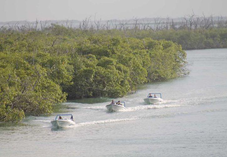La norma 059 prohíbe se afecte el flujo hidrológico de la vegetación nativa. (Jesús Tijerina/SIPSE)