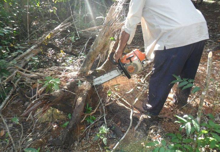 Campesinos recorren la meleza para encontrar un buen árbol. (Manuel Salazar/SIPSE)